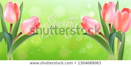 Rosa tulipano fiori verde bokeh vettore Foto d'archivio © frimufilms