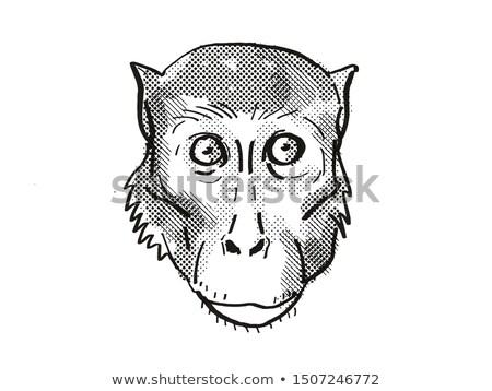 Rhesus Macaque Monkey Cartoon Retro Drawing Stock photo © patrimonio