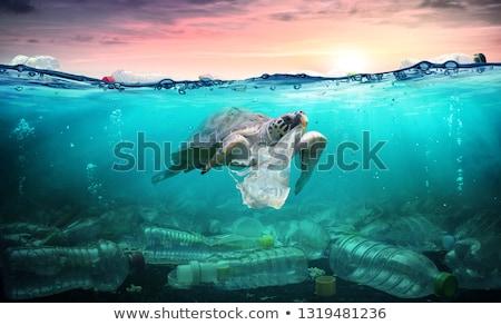 Plastikowe zanieczyszczenia morza butelki brzegu wody Zdjęcia stock © AndreyPopov
