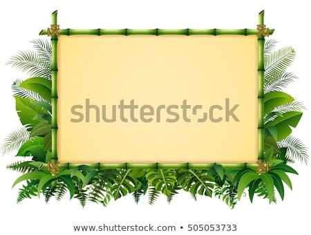 Vetor lona trópicos quadro isolado branco Foto stock © dashadima