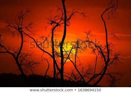 After bush fires in Australia Stock photo © lovleah