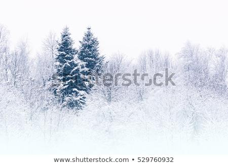 Fagyos fa út hó fedett fényes Stock fotó © lightkeeper