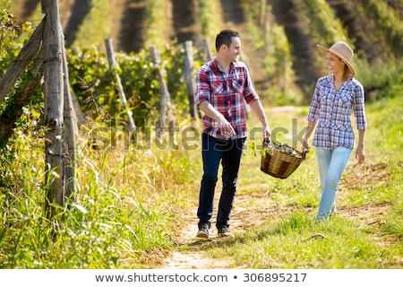 a couple harvesting grapes stock photo © photography33