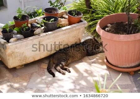 Kat bloempot home tuin katten pot Stockfoto © Komar
