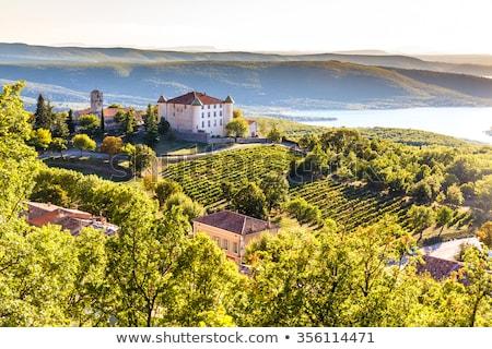 Vineyard in Provence (France) Stock photo © frank11