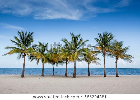 kék · ég · pálmafák · Florida · trópusi · nyár · levél - stock fotó © lunamarina