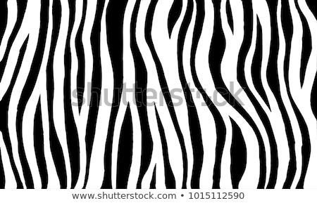 Zebra Stripes Vector Stock photo © ArenaCreative