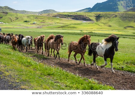 Rural Islandia paisaje montanas lago animales Foto stock © travelphotography