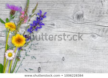 Zsálya virág legelő gyönyörű vad méh Stock fotó © meinzahn