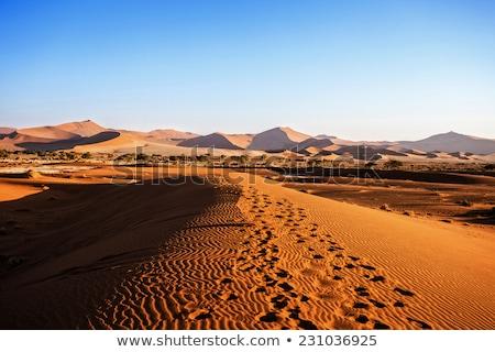 Dead Acacia Trees And Red Dunes Of Namib Desert Zdjęcia stock © Artush
