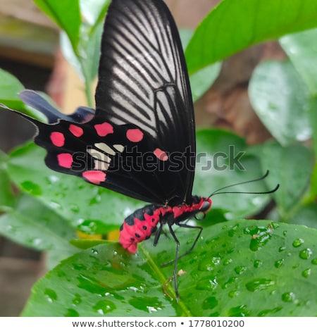 бабочка красивой сидят дерево трава саду Сток-фото © EwaStudio
