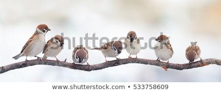 beautiful little bird sitting on a tree branch stock photo © nejron