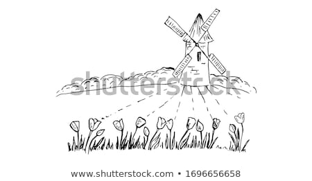Sketch Holland windmill and tulip, vector background Stock photo © kali