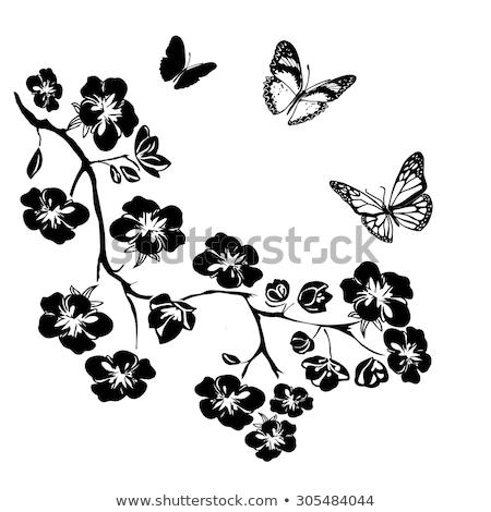 cartolina · evergreen · impianti · isolato · bianco · albero - foto d'archivio © vavlt