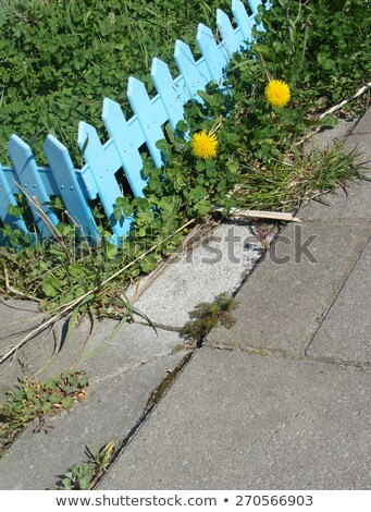 şehir mini bahçe parlak mavi çit Stok fotoğraf © Melvin07
