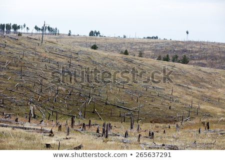 Deforested hillside with remnants of felled trees Stock photo © ozgur