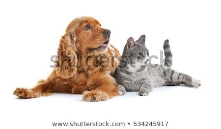 Cute · небольшой · кошек · фото · улыбка - Сток-фото © vlad_star