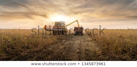 фермер · Постоянный · грабли · стороны · продовольствие · джинсов - Сток-фото © simazoran