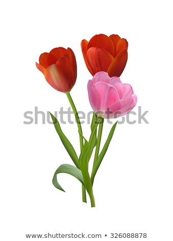Stock photo: Beautiful realistic tulip bouquet. EPS 10