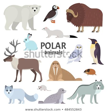 Polar Fox diseno estilo vector Foto stock © robuart
