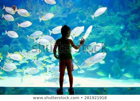çok çocuklar hayvanat bahçesi örnek doğa çocuk Stok fotoğraf © bluering