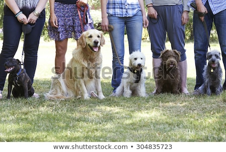 Man teaching dog to be obedient Stock photo © IS2