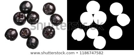 Chokeberry aronia melanocarpa, top, paths Stock photo © maxsol7