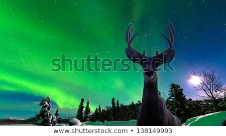 deer and aurora borealis Stock photo © adrenalina