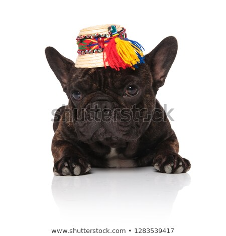 французский бульдог соломенной шляпе вниз сторона Сток-фото © feedough