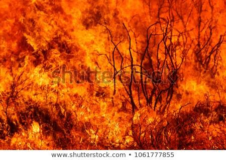 Sziluett futótűz szerencsétlenség tájkép illusztráció fa Stock fotó © bluering