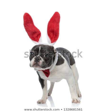 french bulldog with bunny ears and red bowtie Stock photo © feedough