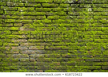 Texture of old stone wall covered green moss in Fort Rotterdam, Makassar - Indonesia BANNER, long fo Stock photo © galitskaya