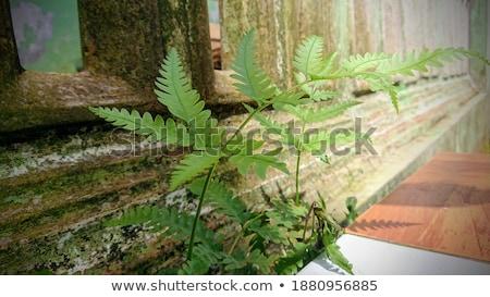 csoport · zöld · levelek · páfrány · nap - stock fotó © AlessandroZocc