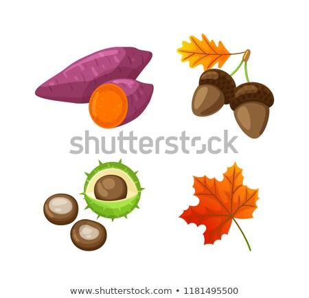 establecer · árbol · hoja · iconos · hojas · de · otoño · aislado - foto stock © robuart
