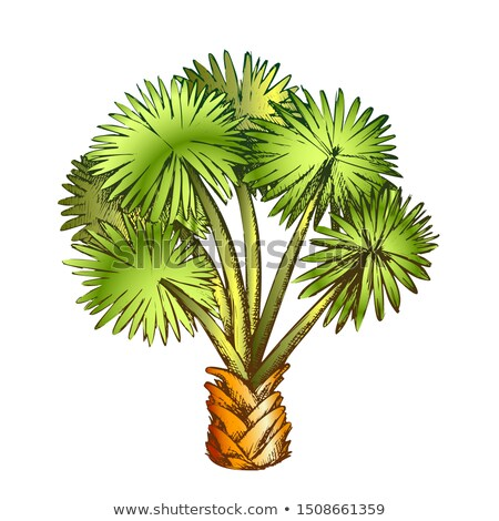 Palm Leaf Tree Texas Palmetto Color Vector Stock photo © pikepicture