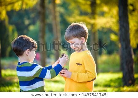 Bonitinho pequeno menino jogar grande pinho Foto stock © galitskaya