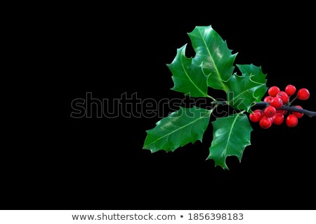 Inverno sempre-viva plantas preto aquarela floral Foto stock © Artspace