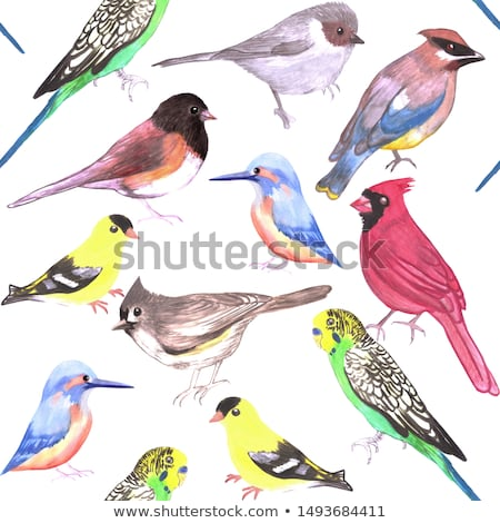 Various birds seamless watercolor background- budgie cardinal goldfinch titmouse kingfisher cedar wa Stock photo © shawlinmohd