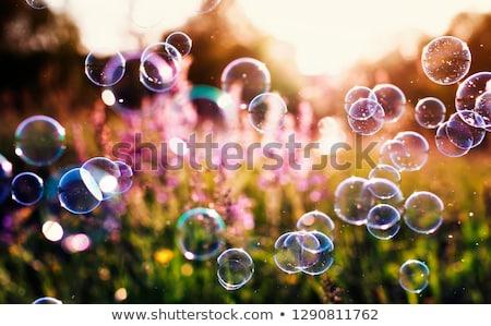 Transparente bolhas de sabão roxo água bubbles borrão Foto stock © ShustrikS