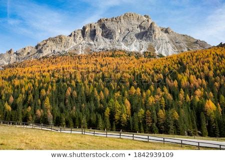 Autumn Alpine Larch Trees Stock photo © skylight
