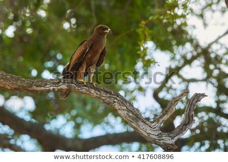 african birds on treetop Stock photo © prill