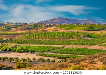 looking over at vineyard Stock photo © photography33
