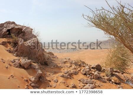 orange arid land Stock photo © smithore