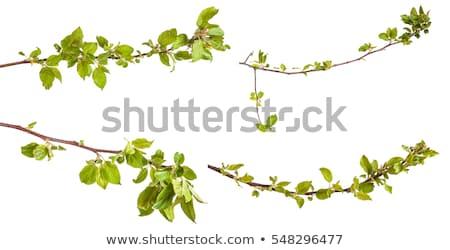 almafa · ág · rózsaszín · virág · világoskék · fából · készült · virág - stock fotó © anskuw