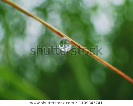 greeen plant close up Stock photo © shutswis
