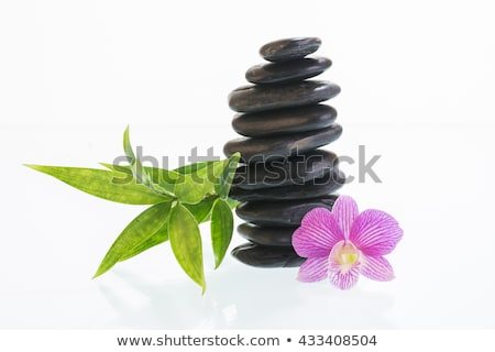 stones and orchid in balance stock photo © compuinfoto