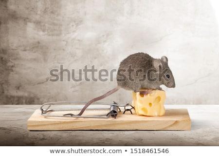Egér csapda sajt fa halál patkány Stock fotó © carenas1