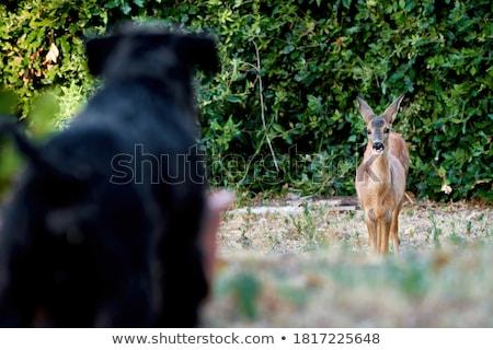 encounter Stock photo © prill