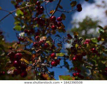 virágok · közelkép · sötét · fa · tavasz · zöld - stock fotó © taviphoto