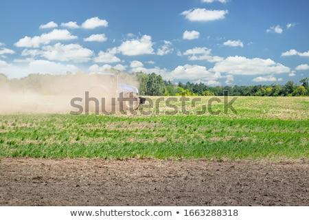Eke mezőgazdaság mező vetés textúra természet Stock fotó © meinzahn